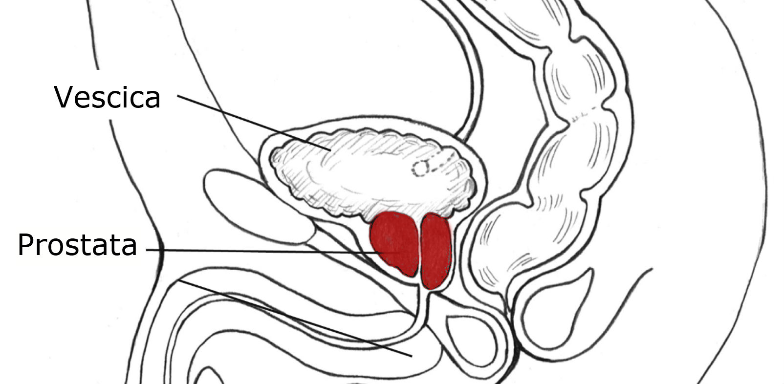 risonanza magnetica prostatica multiparametrica quanto dura